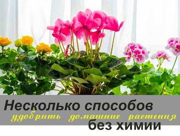 Несколько способов удобрить домашние растения без химии