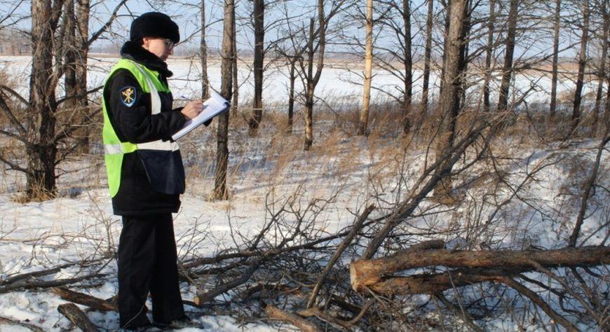 Полиция предупреждает граждан об ответственности за самовольную вырубку лесных насаждений